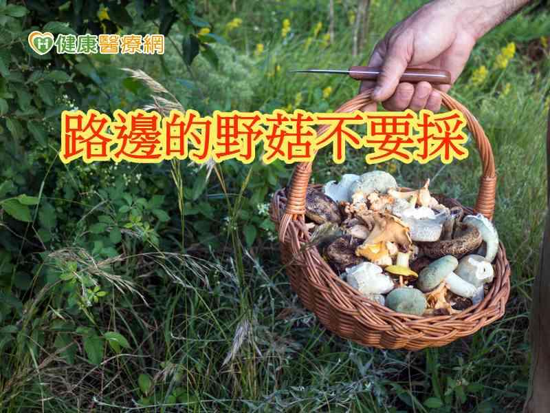 野菇毒魚別亂吃 路邊的野菇不要採